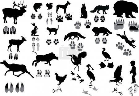 Illustration pour Illustration avec des animaux et ses traces isolés sur blanc - image libre de droit