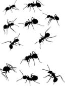 eleven ant silhouettes