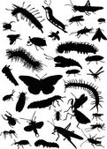 caterpillars and other insects