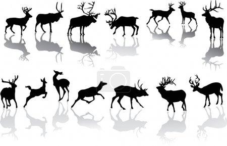 quatorze cerfs aux reflets