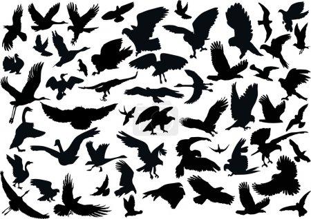 Fifty four bird silhouettes