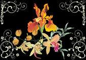 orchid and iris illustation