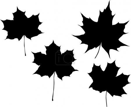 Illustration pour Illustration avec feuilles d'érable isolées sur fond blanc - image libre de droit