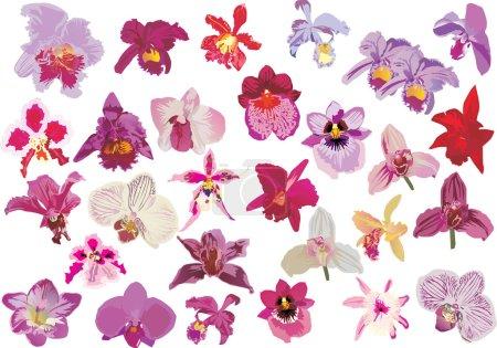 twenty nine red orchids