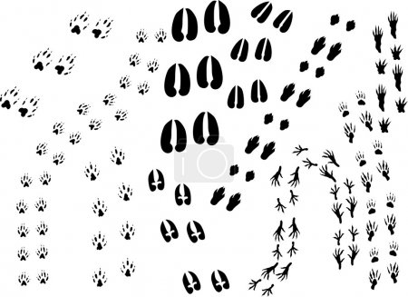 background with animal track