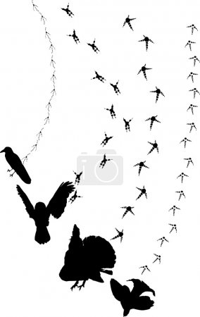 Illustration for Illustration with different birds tracks background - Royalty Free Image