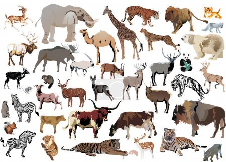 huge set of color animals