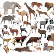 Illustration with animals collection isolated on w...