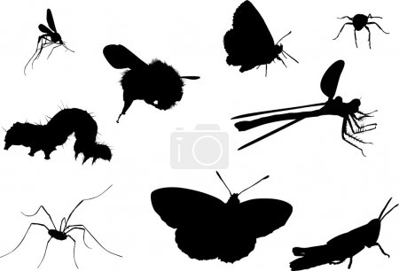 nine black insects