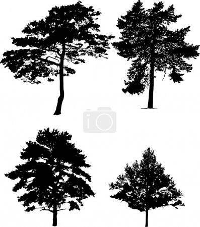 Illustration for Illustration with four pine silhouettes isolated on white background - Royalty Free Image