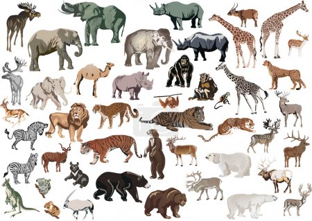 Illustration for Illustration with animals collection isolated on white background - Royalty Free Image