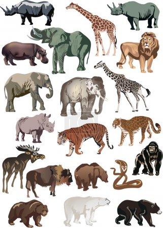 Illustration pour Illustration avec collection d'animaux isolés sur fond blanc - image libre de droit