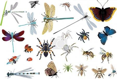 Illustration pour Illustration avec insectes isolés sur fond blanc - image libre de droit