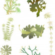 Illustration with set of green moss isolated on wh...