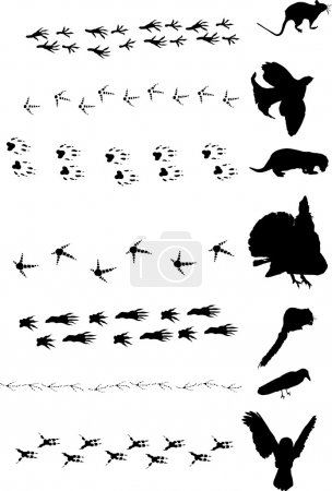 different birds and animals tracks collection