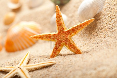 Starfish and sea shells on sand