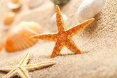 Starfish and sea shells on sand
