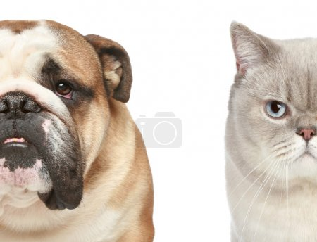 Dog and cat. Half of muzzle close-up portrait