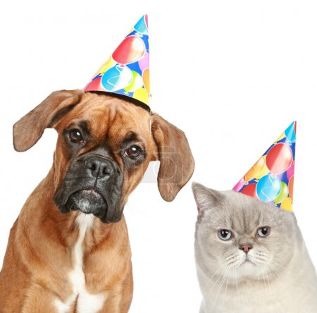German Boxer and cat in party cone