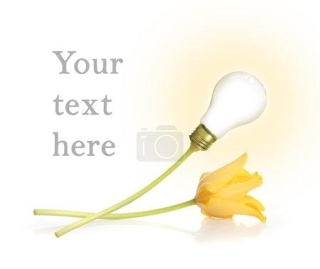 Photo for Shiny lamp and tulip on white background - Royalty Free Image