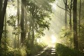Misty spring deciduous forest at dawn