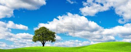 Summer Ecology Banner