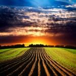 Landscape at sunset...