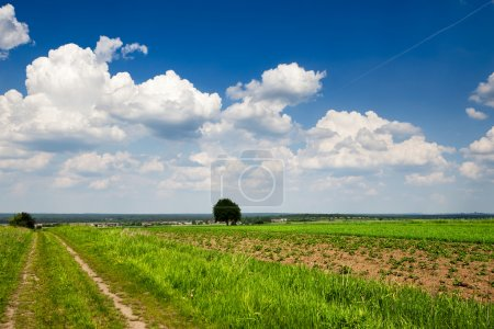 Photo for Eco direct - Royalty Free Image