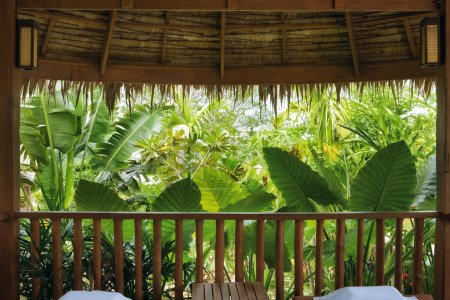 Photo pour Fragment comme point de vue de la belle forêt tropicale brumeux - image libre de droit
