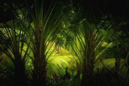 Junglejunglejungle