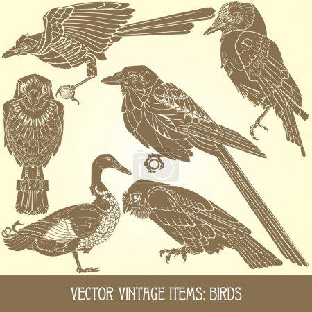 Birds - variety of vintage bird illustrations