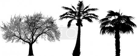 Three black silhouettes of trees (vector illustrat...