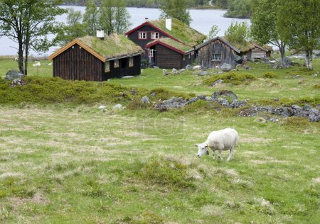 Sheep grazing between mountain cabins