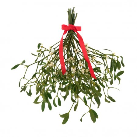 Mistletoe with berries and tied with a red ribbon ...