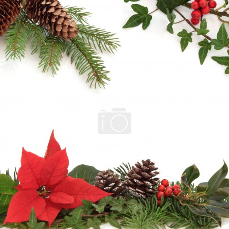 Photo for Christmas decorative border of poinsettia flower, holly, ivy, pine cones and spruce fir leaf sprig isolated over white background. - Royalty Free Image