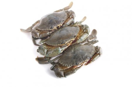 Crabs isolated in white