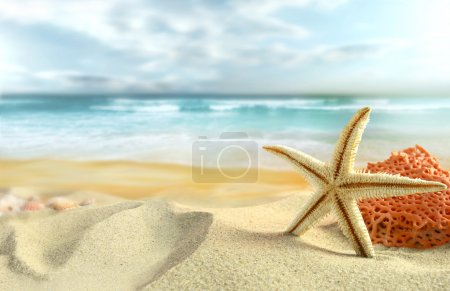 Photo for Starfish and coral on the Beach. - Royalty Free Image