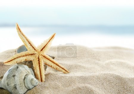 Starfish and seashell on the sandy beach....