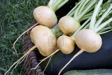 Turnips lying in a basket