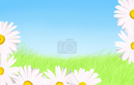 White daisies grass and sky background