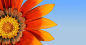 Květ oranžový poklad