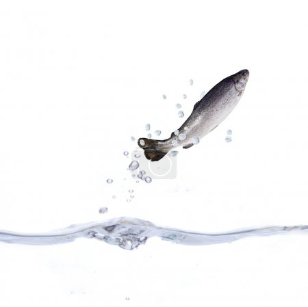Trout and water
