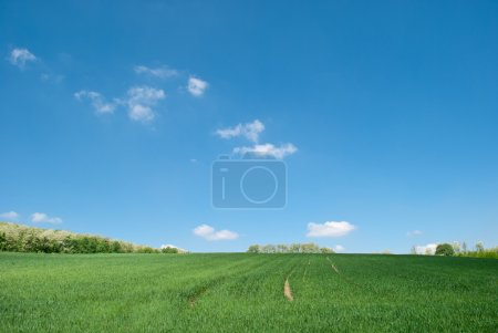 Photo for Empty green field with blue sky. Realistic colors. - Royalty Free Image