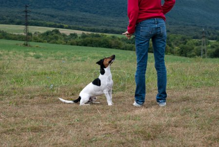 Training the dog obedience
