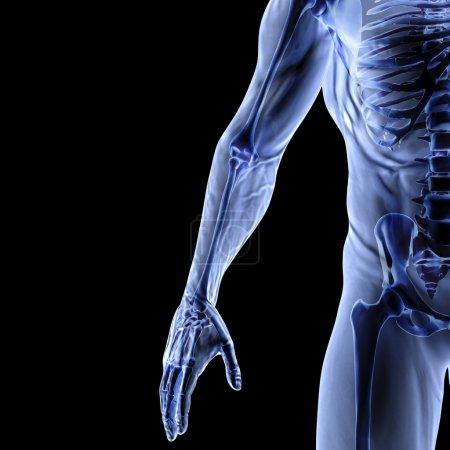Photo pour Bras d'homme sous rayons X. isolé sur noir . - image libre de droit