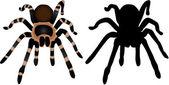 Spider Silhouette 1