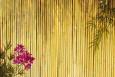 Fresh orchids with bamboo background