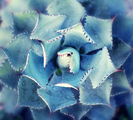 Photo for View of a cactus - Royalty Free Image