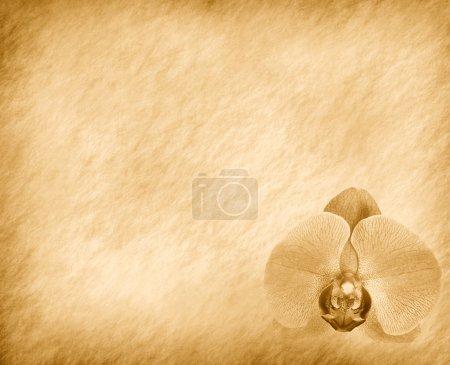 Foto de Fondo de fondos vintage con Orquídea - Imagen libre de derechos
