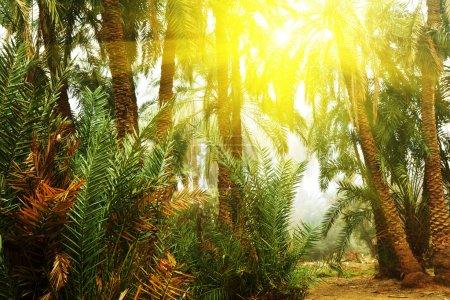 Photo pour Palmier sur Hawaï - image libre de droit